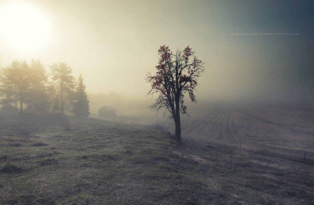 Nature-121003-008.jpg