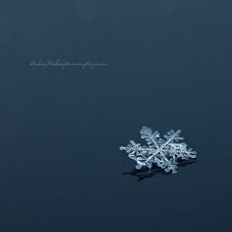 Snowflake-100209-001.jpg