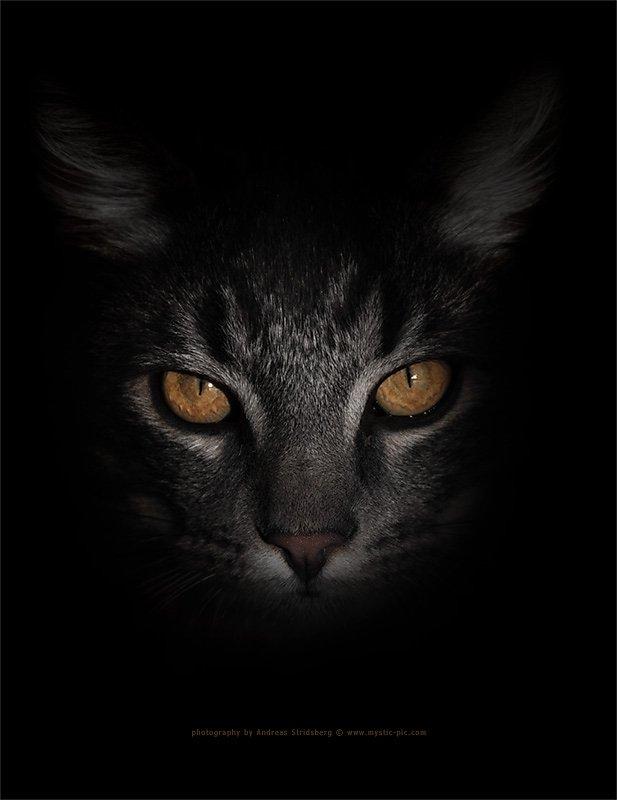 Bamse-eyes.jpg