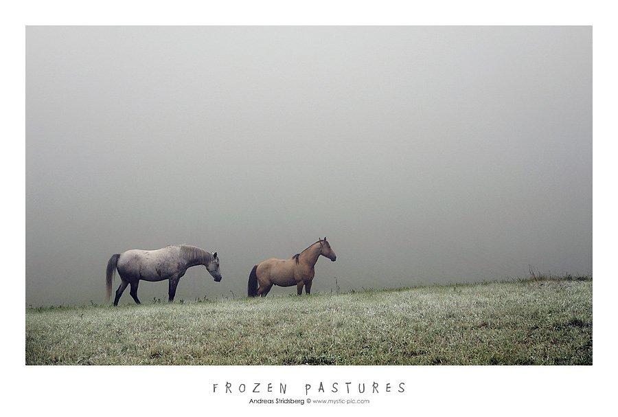 frozen-pastures.jpg