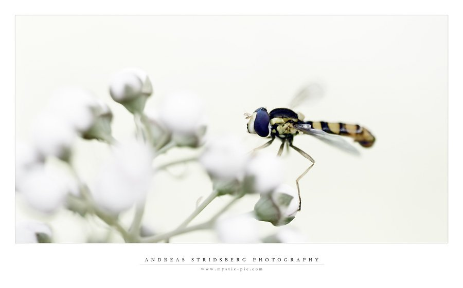 hoverfly-classy.jpg