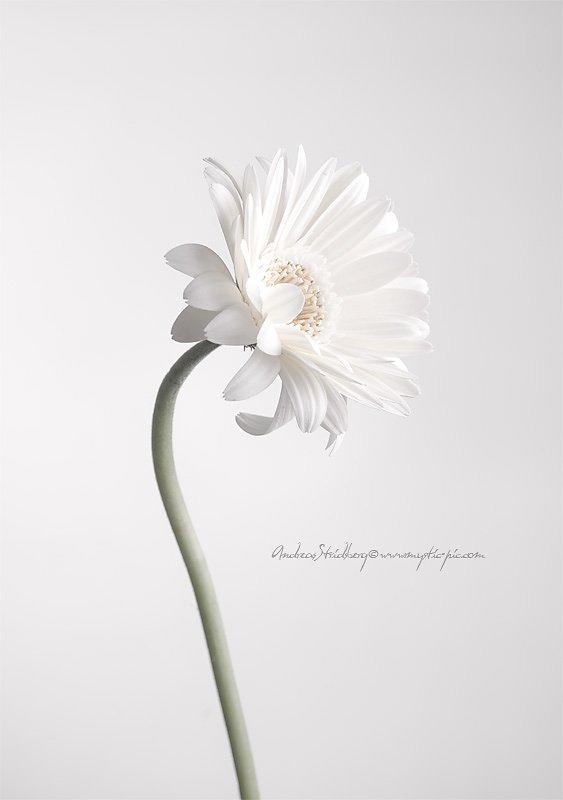 Floral-100225-017.jpg