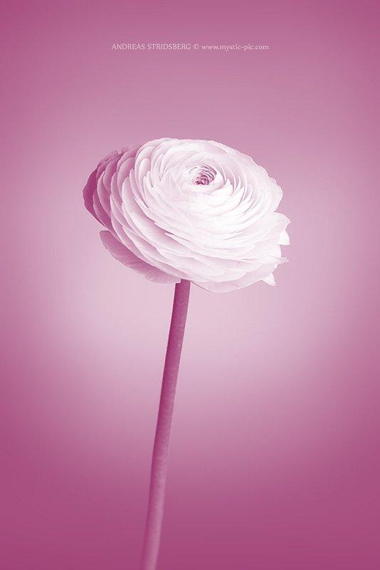 Floral-140307-040-2.jpg