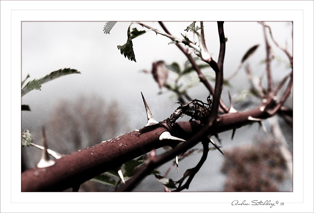 autumn-thorns.jpg