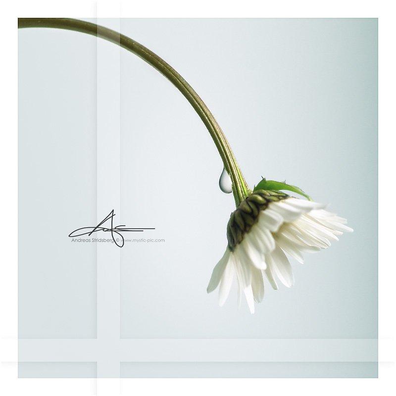 dandelion-drop.jpg