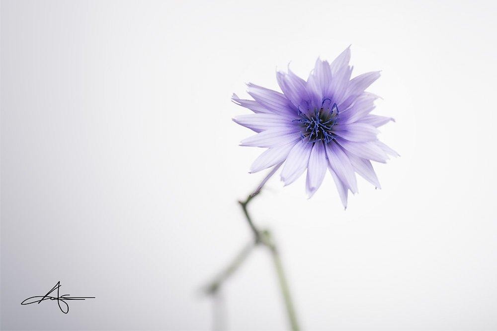 Floral-140727-019.jpg