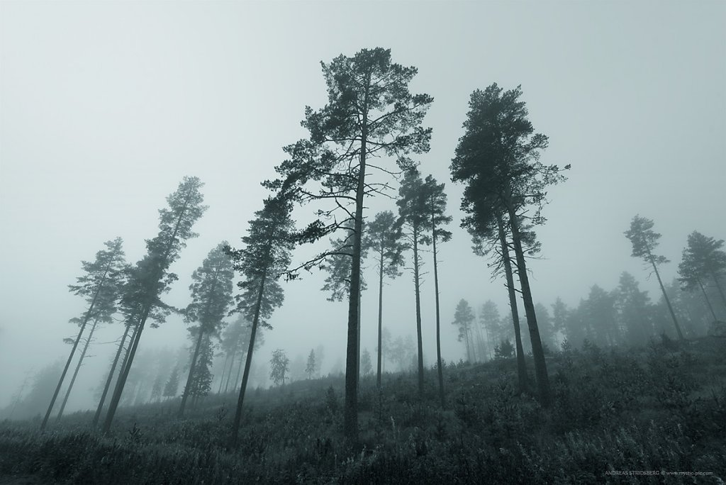 Fog-160927-036.jpg