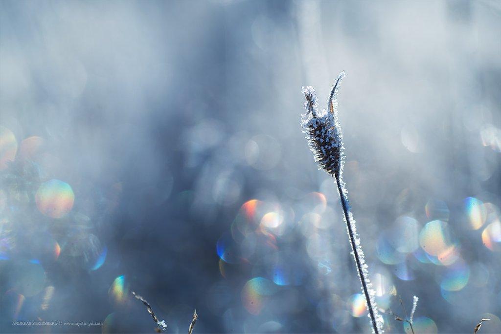Frost-161012-015.jpg
