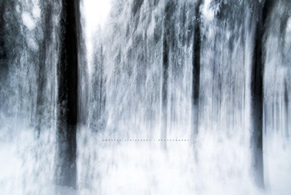 Nature-170112-055.jpg
