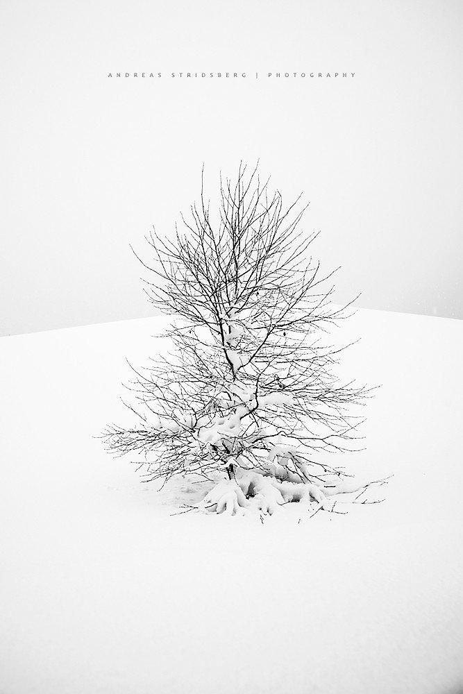 Nature-170112-081.jpg