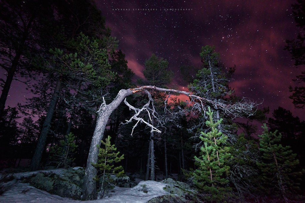 Nature-170123-018.jpg
