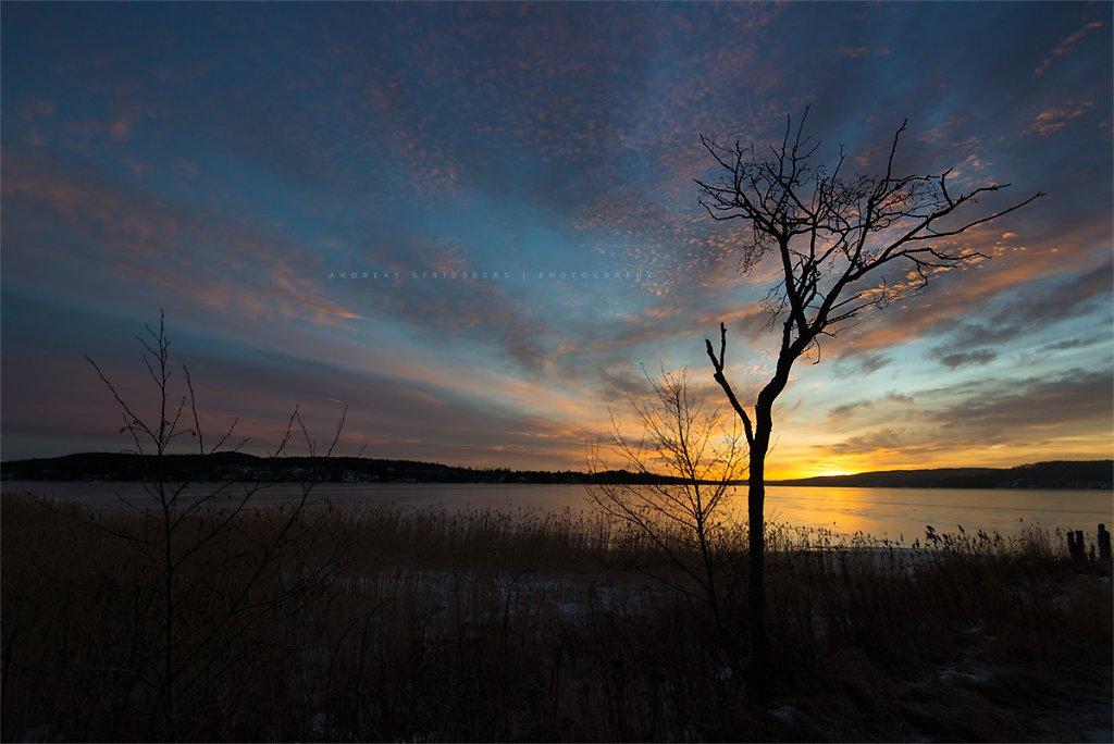 Nature-170201-017.jpg