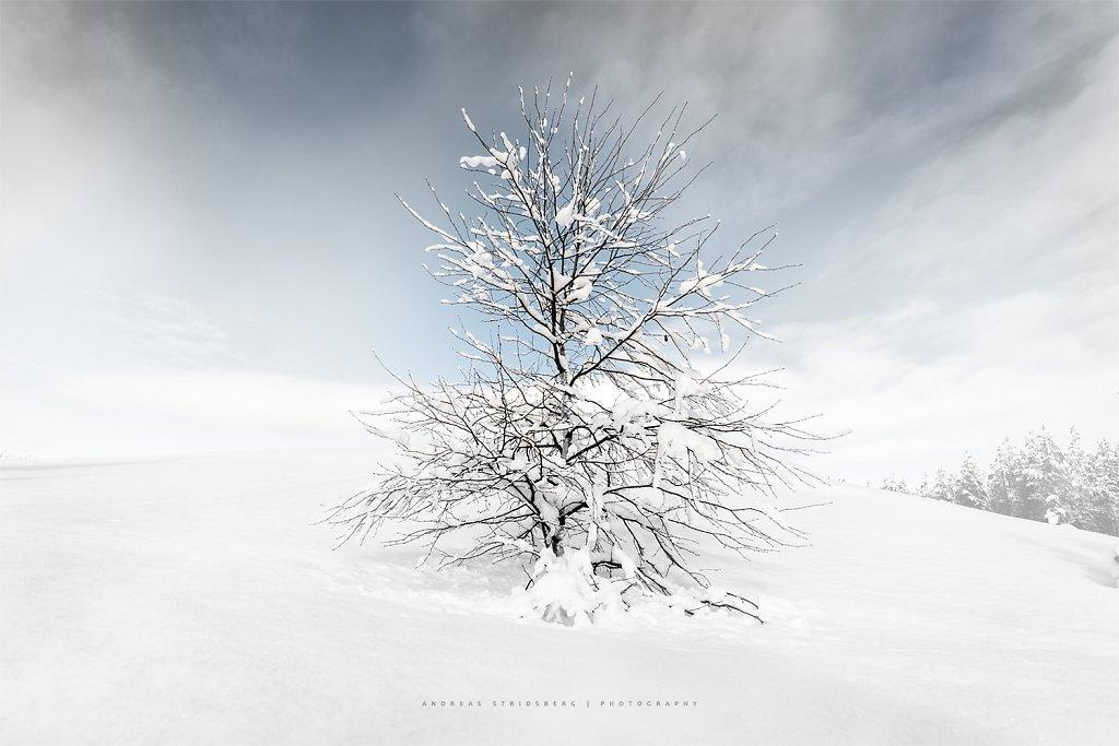 Nature-170304-023.jpg