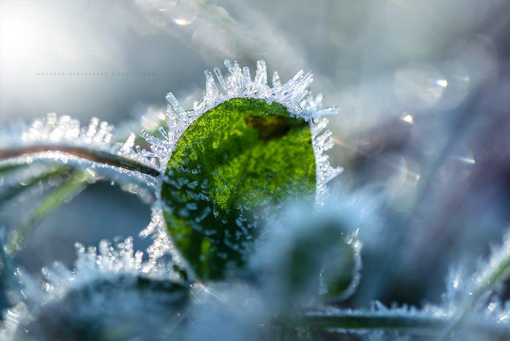 Frost-171104-020.jpg