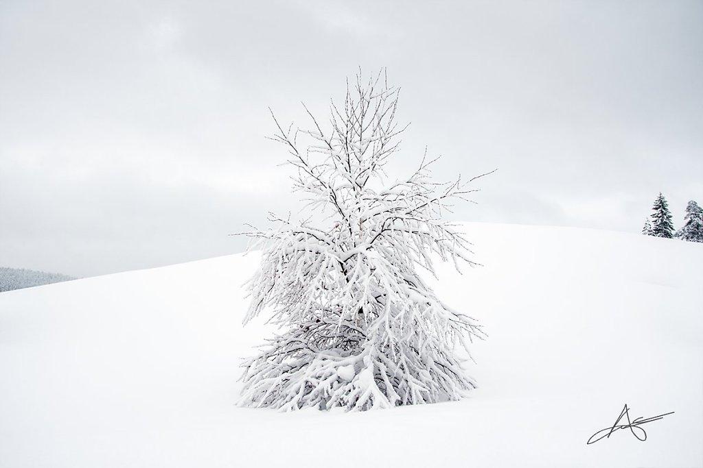 Nature-171214-D500-037.jpg