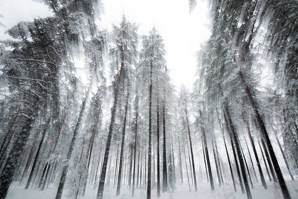 Nature-181219-060.jpg