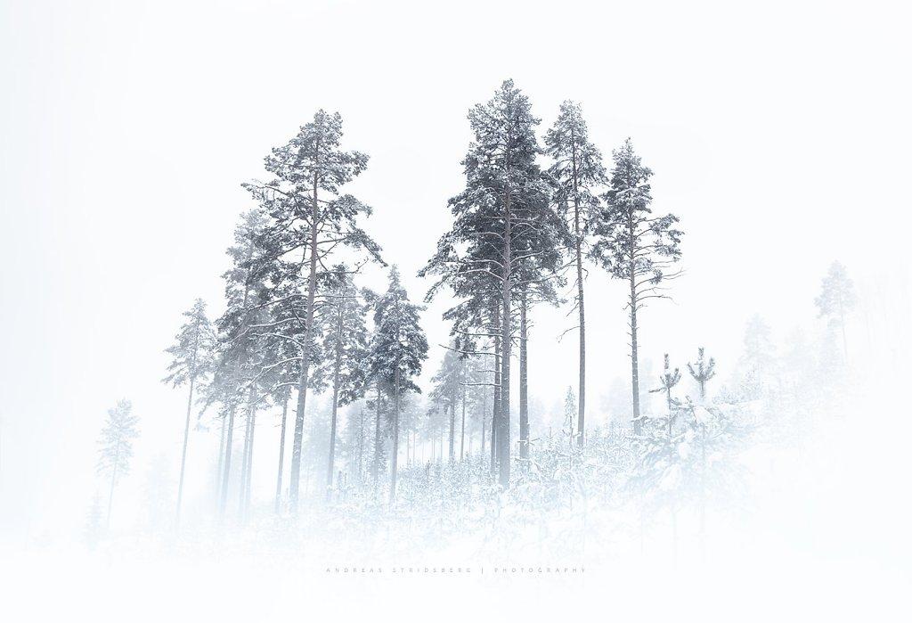 Nature-190208-071.jpg