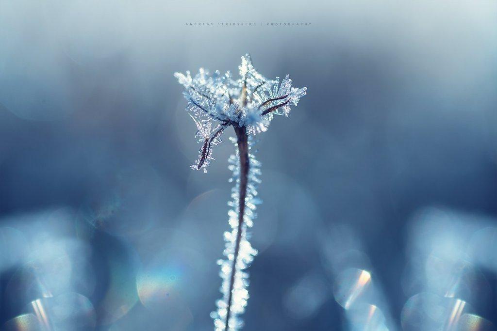 Frost-171104-070.jpg