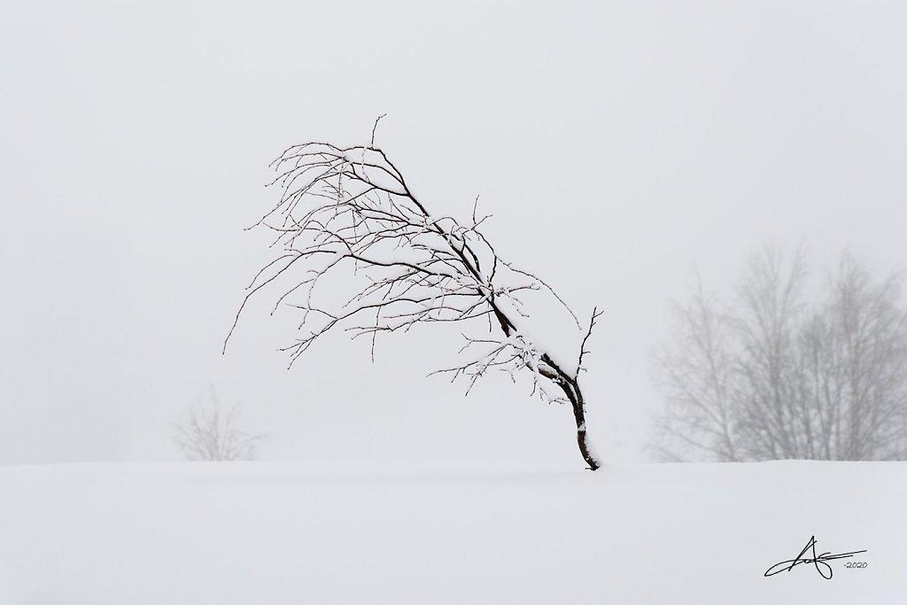 Nature-200128-031.jpg