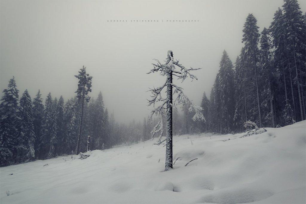 Nature-200128-089.jpg