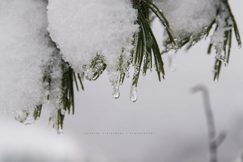 Nature-200129-017.jpg