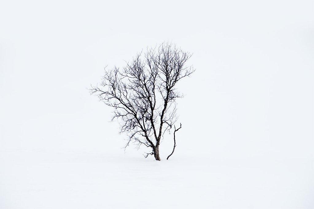 Nature-200323-022.jpg