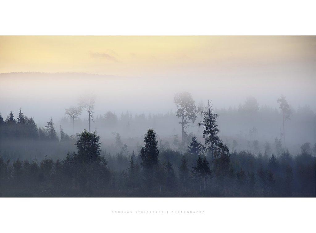 Nature-200902-065.jpg