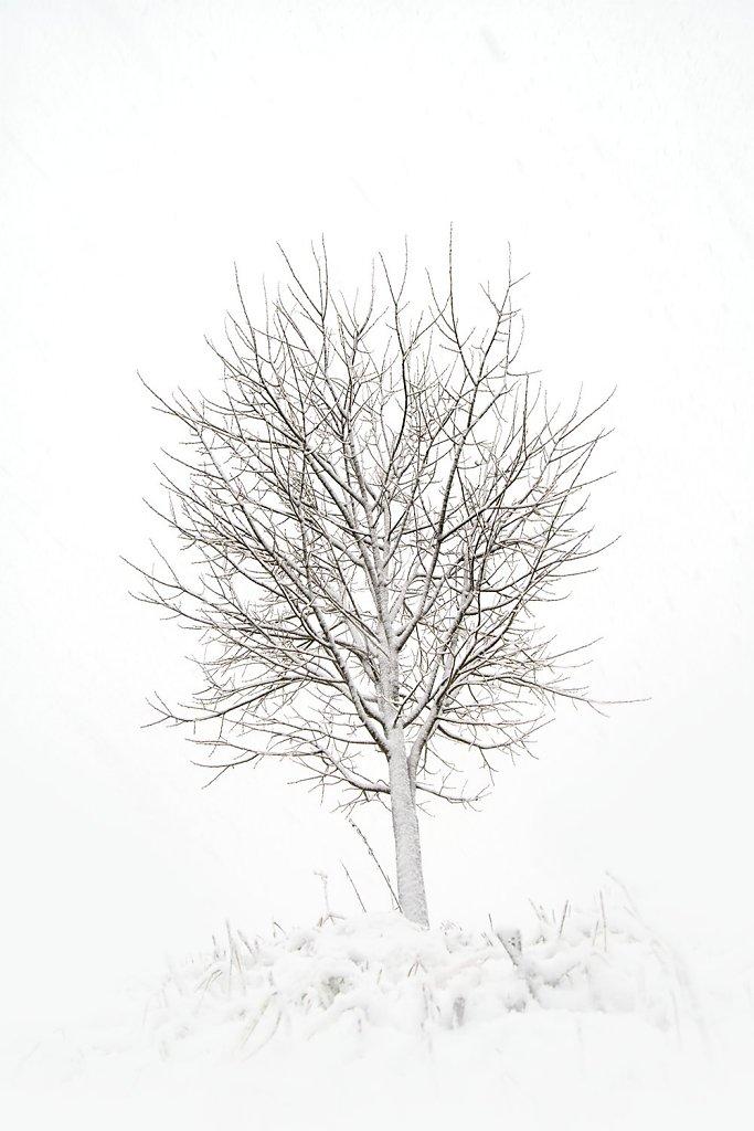 Nature-201119-016.jpg