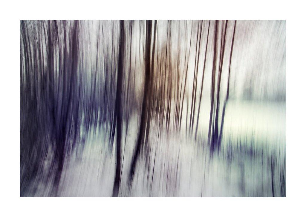 Nature-201119-002.jpg