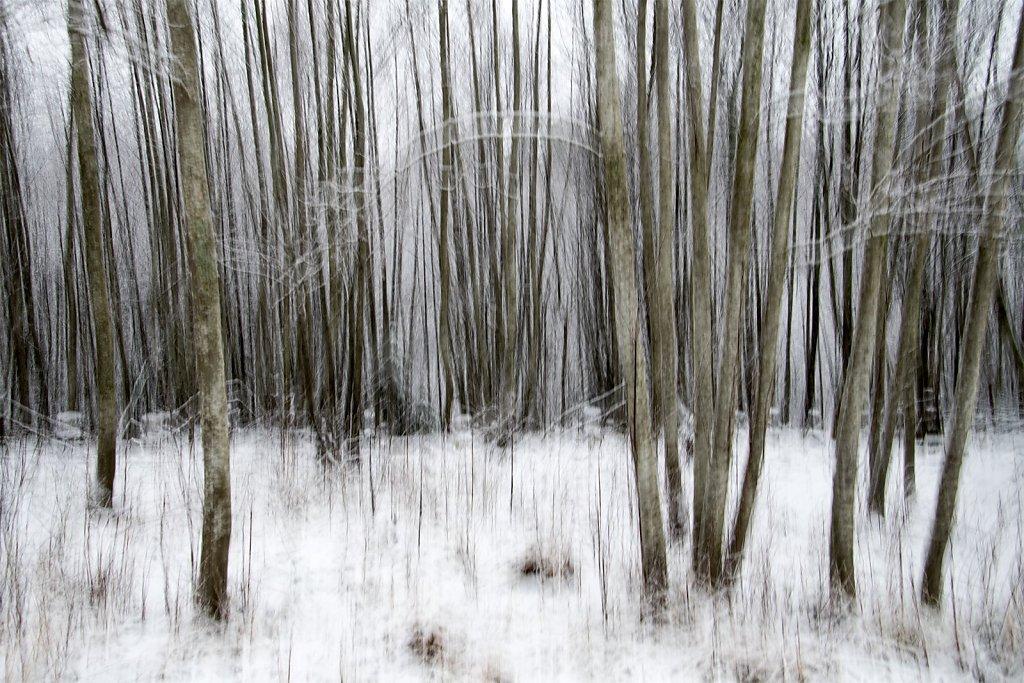 Nature-201119-005.jpg