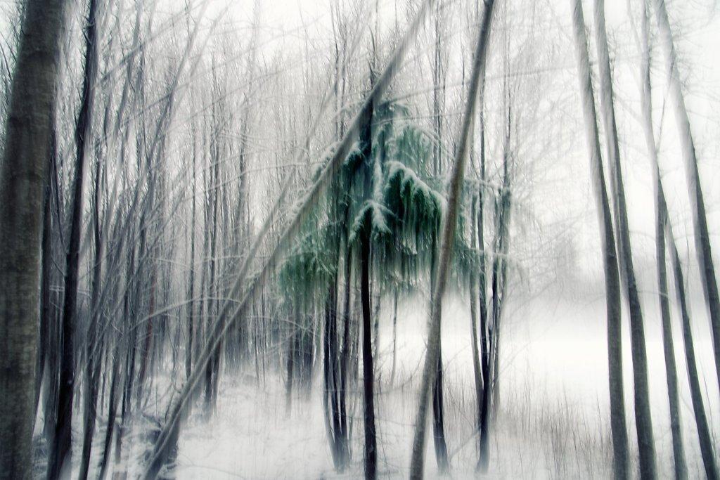 Nature-201119-009.jpg