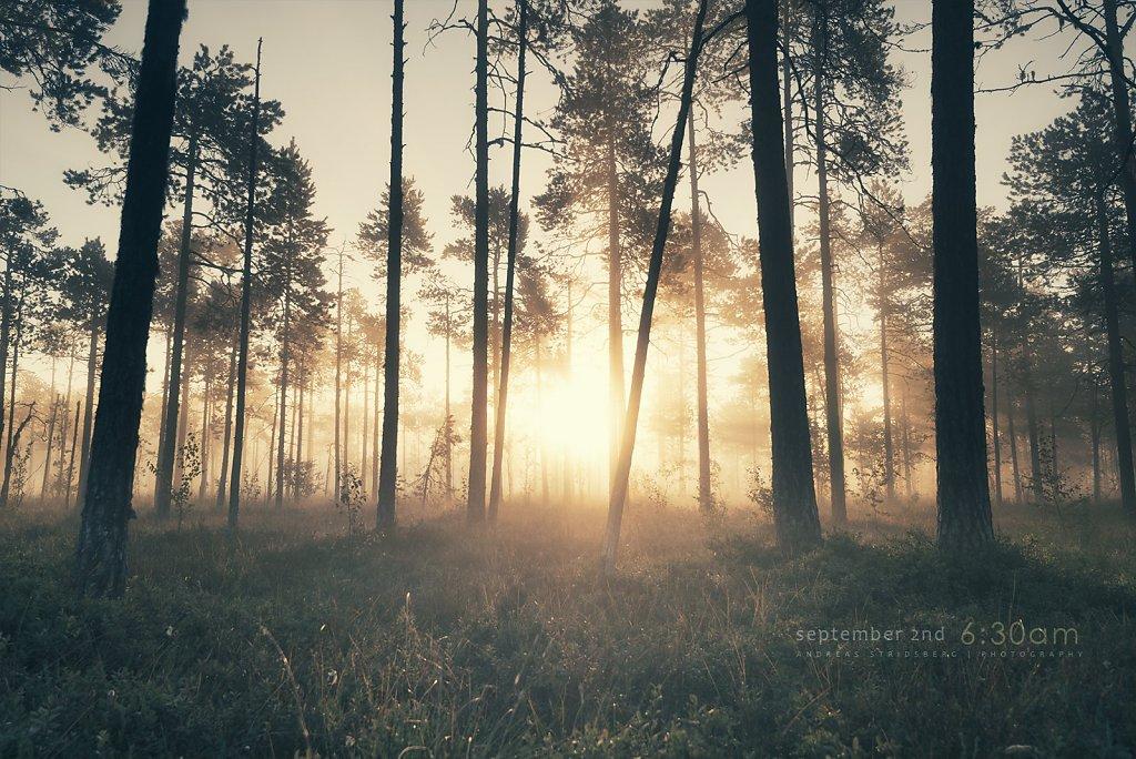 Nature-200902-133.jpg