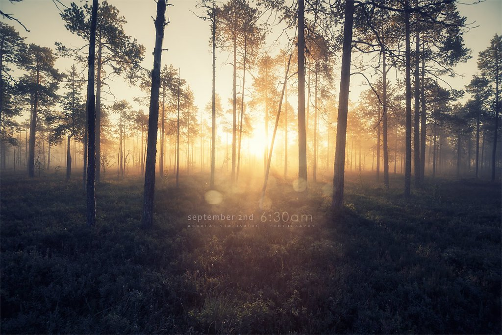 Nature-200902-135.jpg