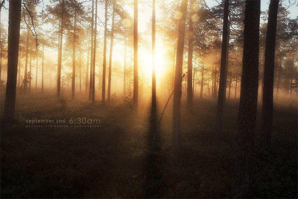 Nature-200902-142.jpg
