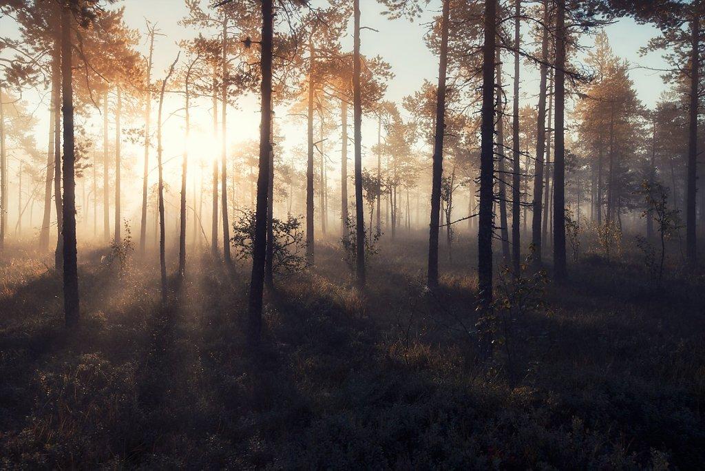 Nature-200902-171.jpg