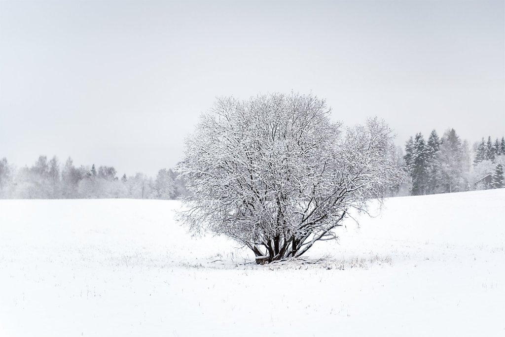 Nature-201218-007.jpg
