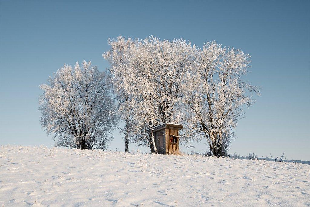 Nature-210105-018.jpg