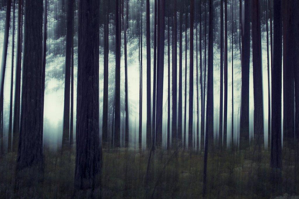 Nature-200803-014.jpg