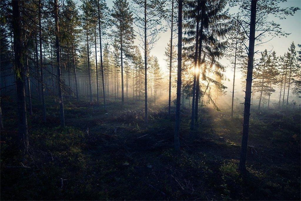 Nature-200902-115.jpg