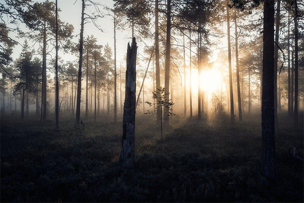 Nature-200902-126.jpg