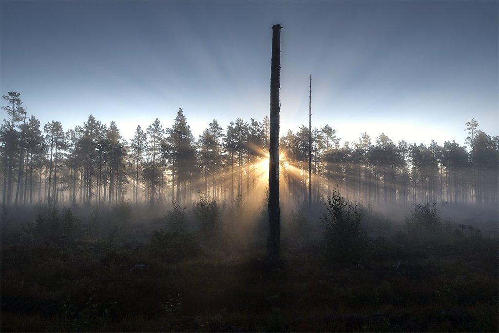 Nature-200902-179.jpg
